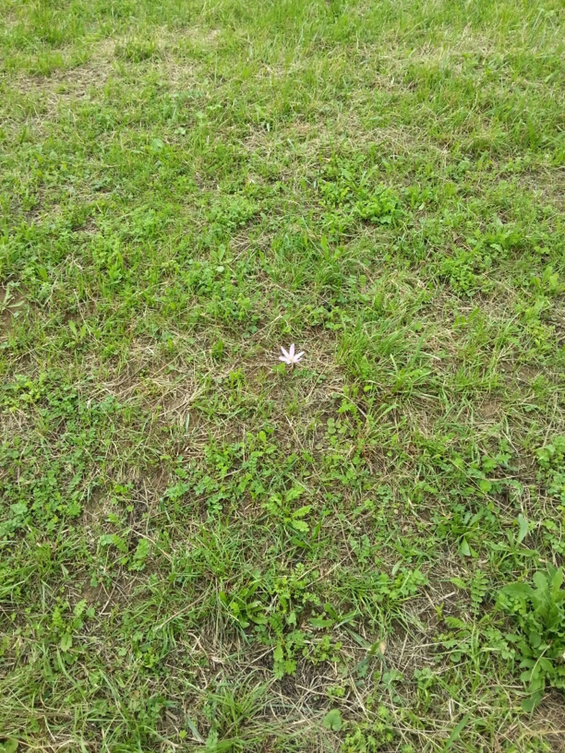 grass, field, grassy, high angle view, green color, growth, nature, day, outdoors, no people, beauty in nature, tranquility, full frame, plant, backgrounds, sunlight, elevated view, green, white color, lawn