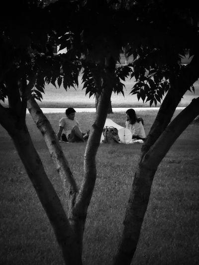 2017/6/25 街拍獵影~小倆口的草地 於臺南奇美博物館外 Couple Date Taiwan Museum Bw Bw_lover BW_photography B&w Photo B&w Bw Photography B&w Photography Bwphotography Streetphotography Street Street Photography Streetphoto_bw Street Scene Streetphotography_bw b&w street photography Tree Palm Tree Men Holiday Moments EyeEmNewHere