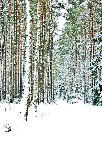 Winter. Tree Forest Nature Snow Cold Temperature Winter No People Landscape Day Outdoors Beauty In Nature GetbetterwithAlex Poland Photos Nature Reserve Beauty In Nature Winter Landscapephotography GminaCekcynPoland Borowiakpassion&photography