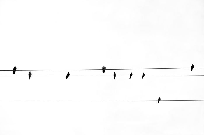 - Birds in a row Fine Art Photography Fineart_photobw Artistic Photo Bnwphotography Visual Creativity negative space Bnw_captures Bnw_collection Blackandwhite Photography Travcimages Eye4photography  EyeEm Gallery EyeEm Best Shots Popular Photos eyeemphoto Animals In The Wild Bird Low Angle View Vertebrate Sky Animal Wildlife Electricity  Silhouette