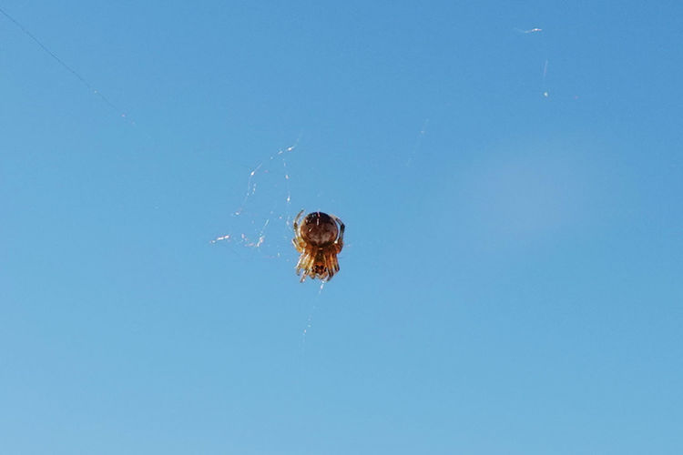 Low angle view of spider web against blue sky