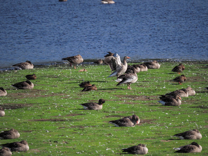 High angle view of birds on lake shore