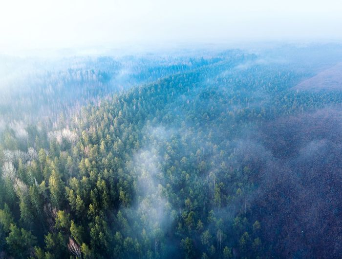 Lithuania Bog Marsh Marshland  Wetland Nature Landscape Landscape_Collection Landscape_photography Drone  Dronephotography Drone Photography Aerial View Aerial Shot Aerial Photography Aerial Landscape Foggy Foggy Morning Tree Forest Fog Aerial View Pinaceae Sky Landscape Valley Pine Woodland Evergreen Tree Mist Eastern Europe