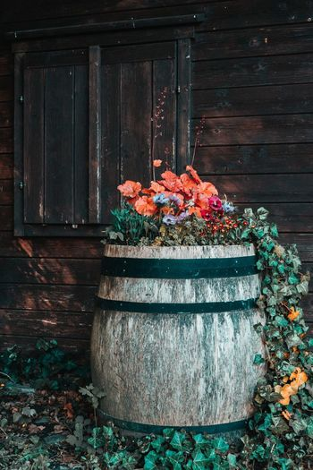 Potted plants on wooden log