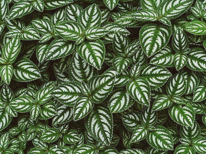 Full frame of leaves