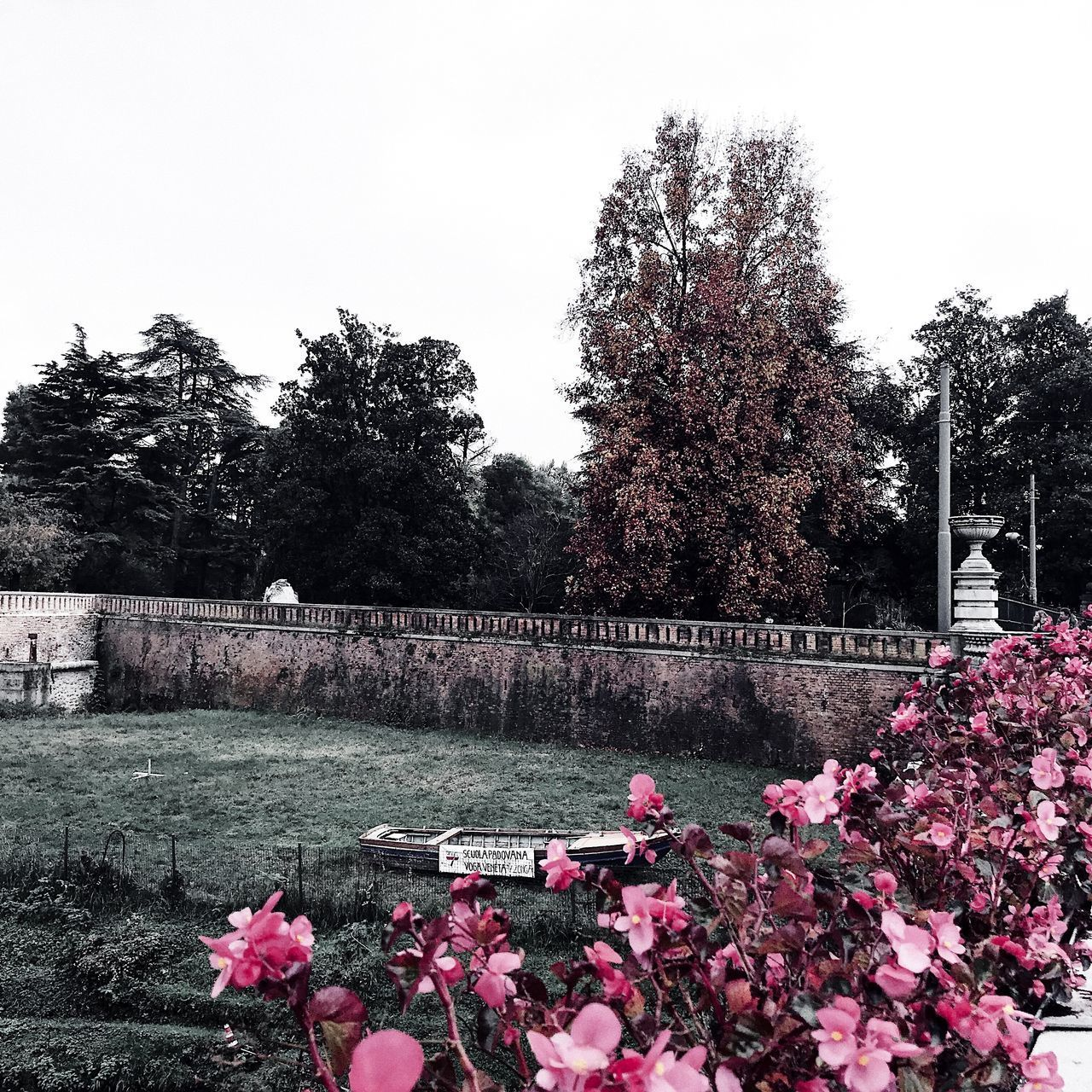 plant, flower, flowering plant, tree, growth, sky, nature, beauty in nature, freshness, pink color, clear sky, day, fragility, vulnerability, architecture, no people, outdoors, cemetery, built structure, park