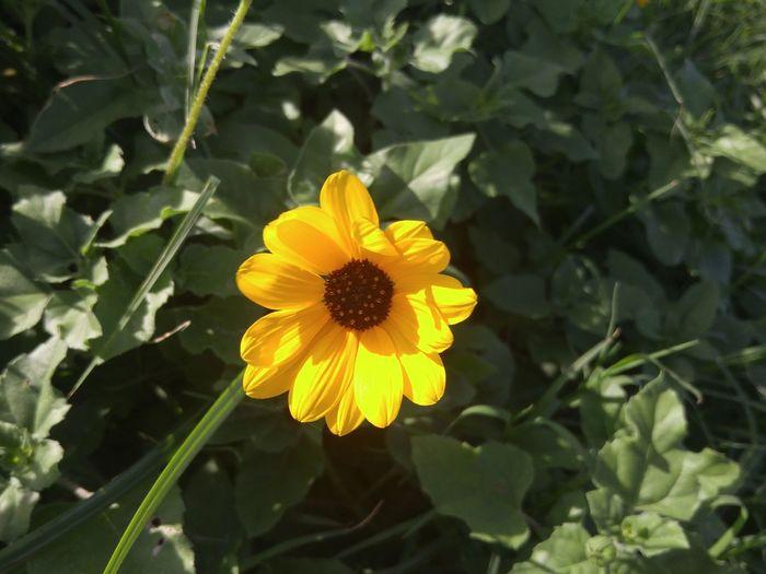 A wild flower,
