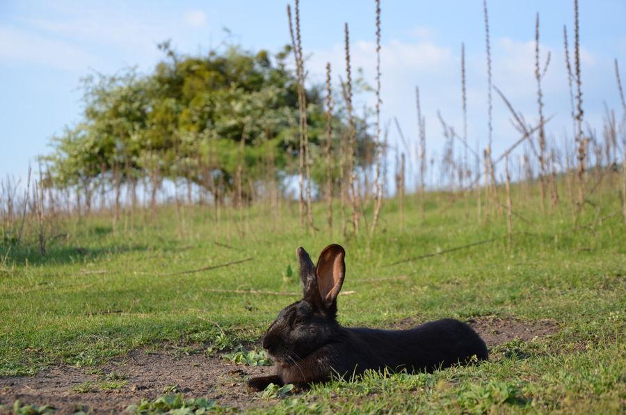 Animal Animal Portrait Farm Farm Life Field Grassy Green Color Nature Outdoors Rabbit Rabbits Ranch Ranch Life Wild Wild Life