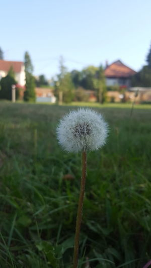 Flower Focus On