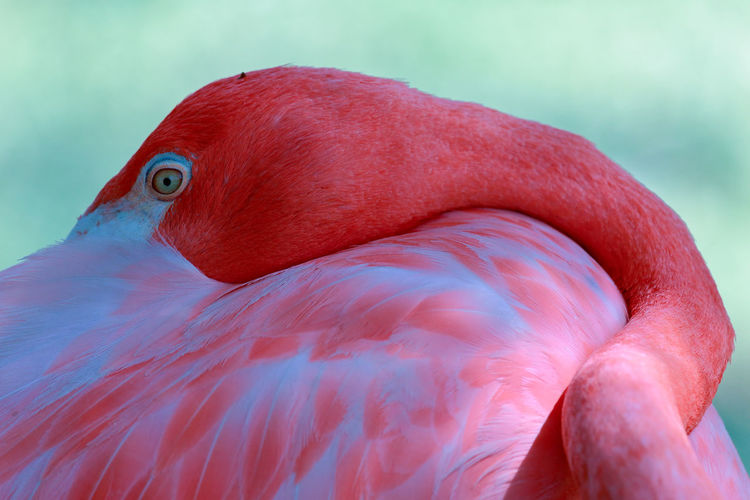 Close-up of flamingo resting outdoors