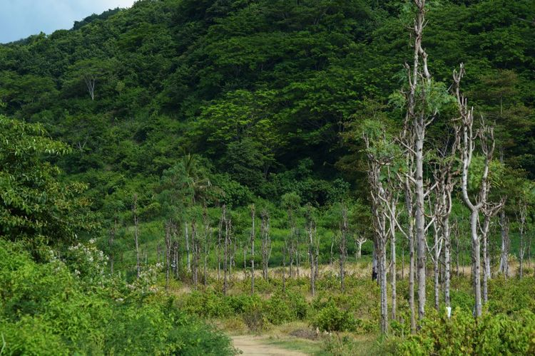 Tree Grass Green Color Plant Green Countryside Greenery Young Plant Grassland Vegetation Growing Woods Flora