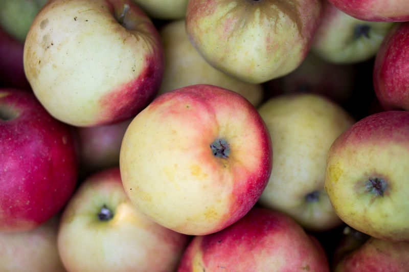 Apple Apple - Fruit Apples Backgrounds Close-up Day Food Food And Drink For Sale Freshness Fruit Healthy Eating Jonagold Large Group Of Objects Market No People