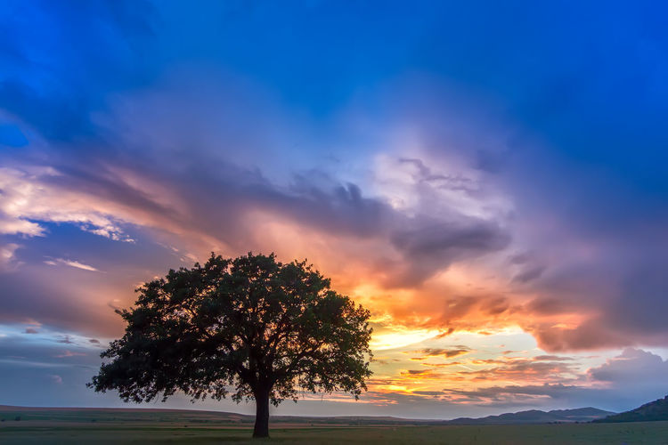 Beautiful Lonely Rural Sunlight Beauty In Nature Cloud - Sky Countryside Dusk Environment Field Landscape Meadow Nature Oak Tree Orange Color Outdoors Park Plant Scenics - Nature Season  Sky Summer Sunset Tranquility Tree