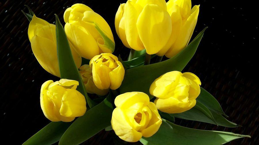 Germany 2015 Yellow Flower Tulips🌷 Blumen Flowers Spring Flowers Spring2015 Springtime Yellow Eye Em Best Shots -Flowers Eye Em Nature Lover