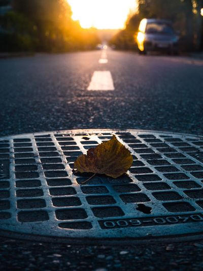 Nature Leaf Plant Part Close-up Sunset Street Sky Road City Sunlight No People Focus On Foreground Day Selective Focus Metal Outdoors Autumn Transportation Change Plant Eyeemawards2016