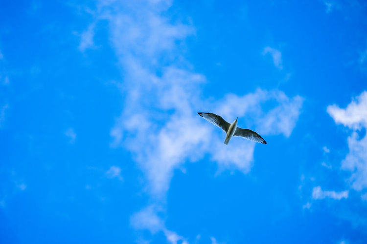 Animals In The Wild Bird Blue Carefree Cloud - Sky Clouds Clouds And Sky Day Flying Low Angle View Nature One Animal Outdoors Sea Gull Sky Spread Wings Wildlife