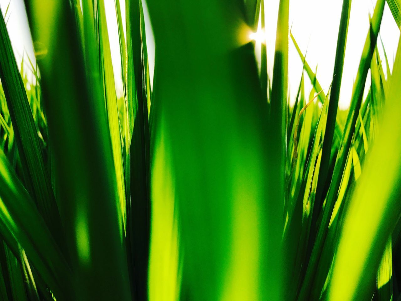 green color, growth, nature, close-up, plant, backgrounds, day, no people, grass, palm tree, outdoors, beauty in nature, freshness
