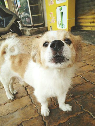 Doglover Cute Dog