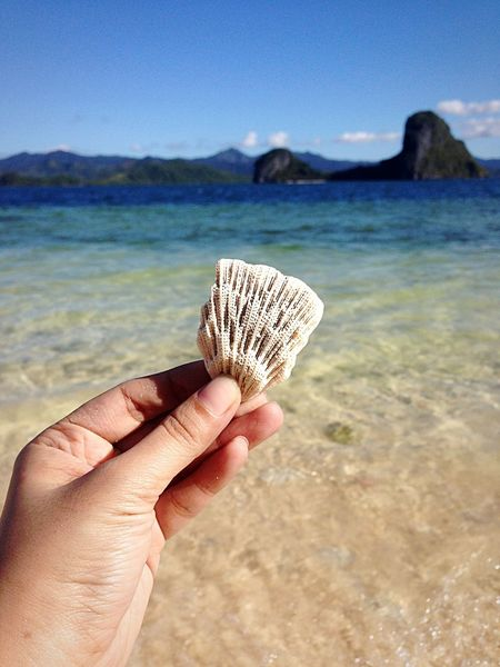 Fascinating fascinations. ElNidoIslands Palawan Travel Travel Photography Beach Life First Eyeem Photo Showcase March Focus Object