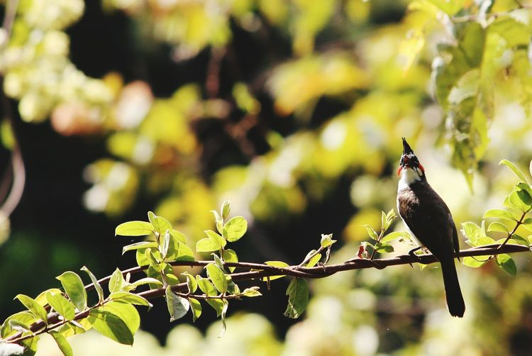 Wildlife Photography Birds_n_branches Karnala Bird Sanctuary