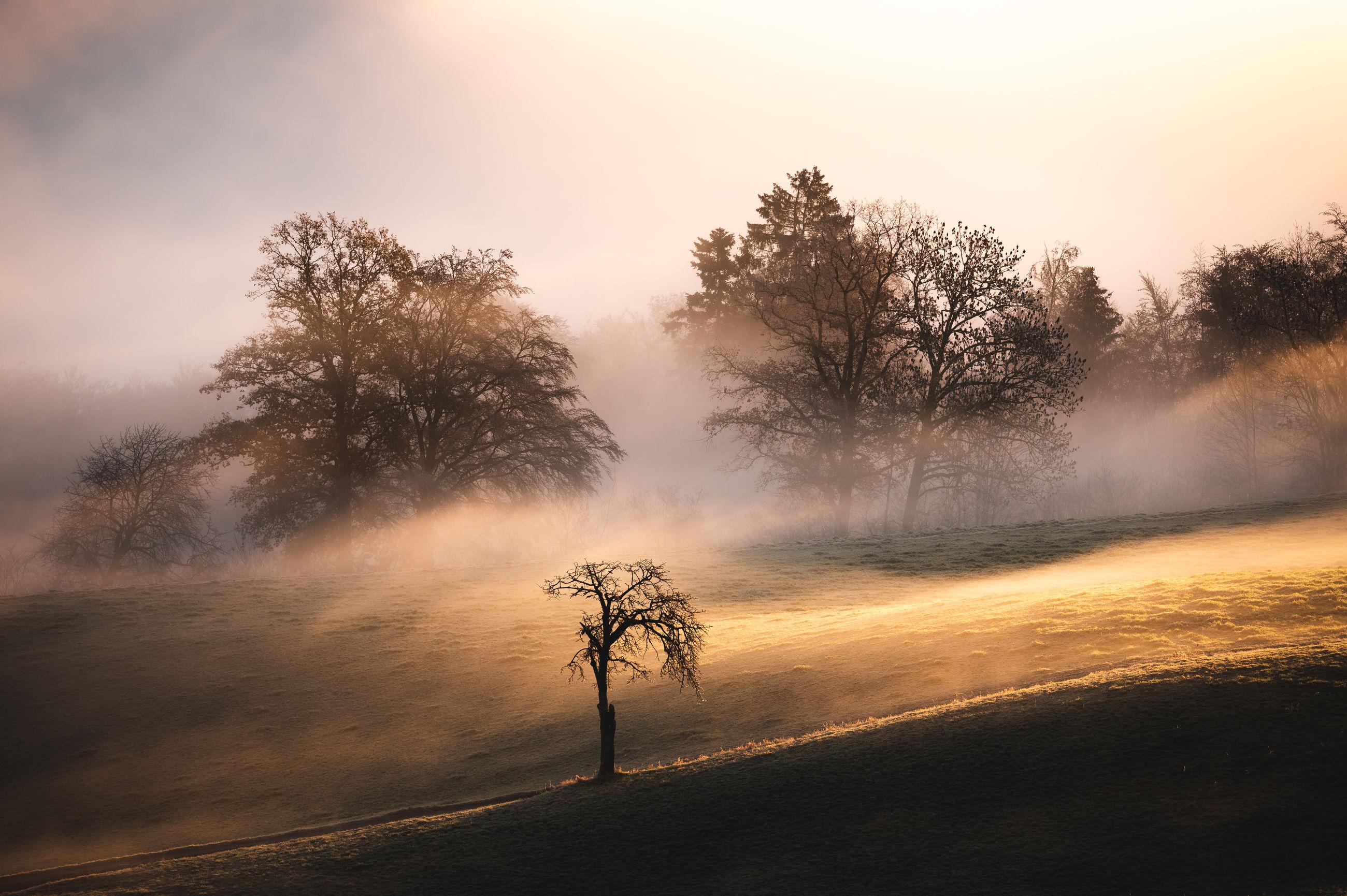 morning, tree, mist, dawn, nature, sunrise, fog, plant, environment, sunlight, sky, landscape, land, beauty in nature, sun, rural scene, scenics - nature, cloud, tranquility, twilight, outdoors, no people, forest, silhouette, road, tranquil scene, non-urban scene, back lit, travel, horizon, sunbeam