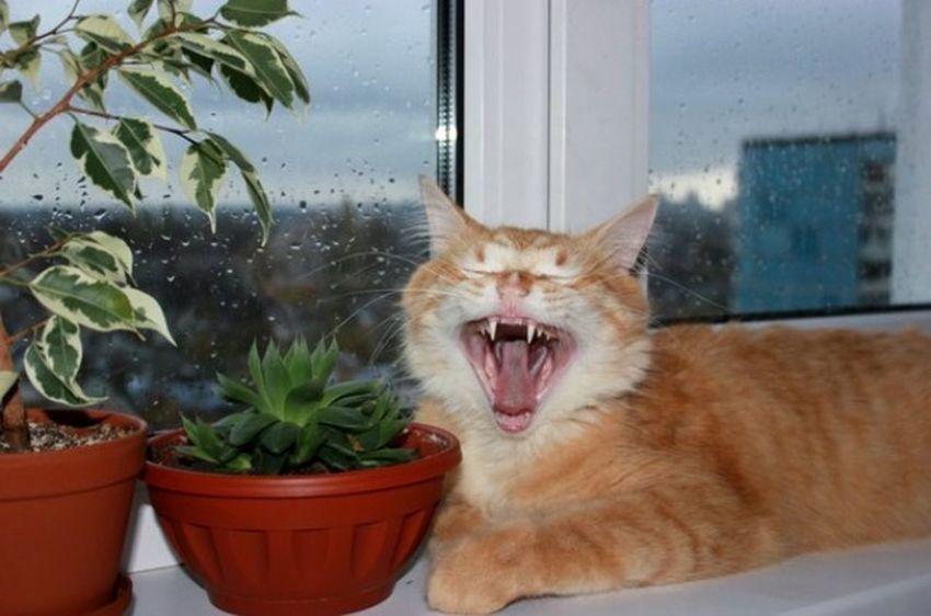Снимай бельеееее! Cat рыжий кот Áfonya Афоня Afonsiko Cats Cat♡