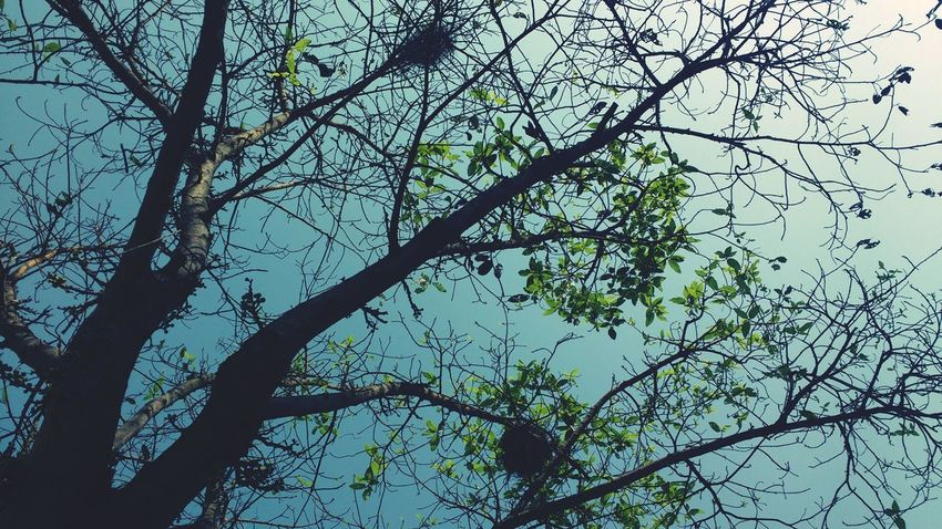 Trees and nests🌳🍀 Low Angle View Beauty In Nature Sky Officetime Atbusstop😝😝