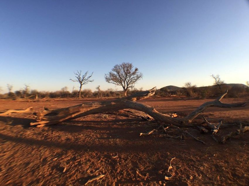 Bare Tree Beauty In Nature Desert Field Game Drive Landscape Lone Nature No People Outdoors Sand Sky Solitude South Africa Tree Tree
