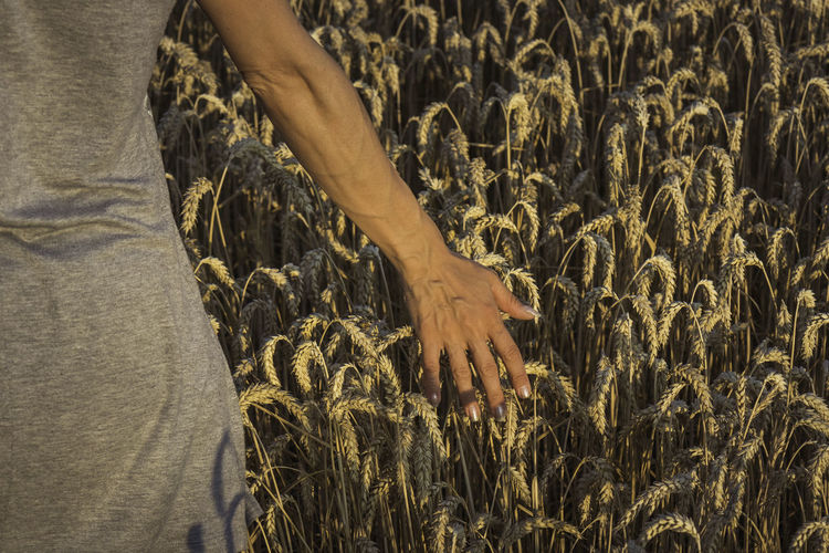 Close-up of hand touching crops on field