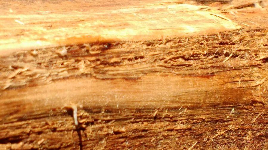 Wood Made