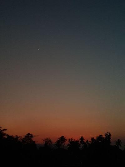 sunset Astronomy Tree Moon Sunset Crescent Space Bird Constellation Galaxy Silhouette Half Moon