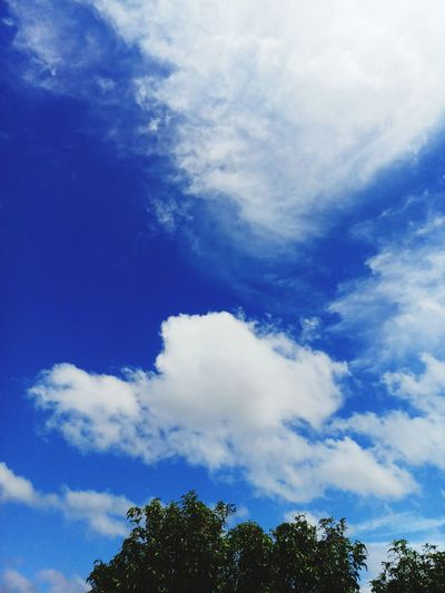 Tree Blue Sky Cloud - Sky