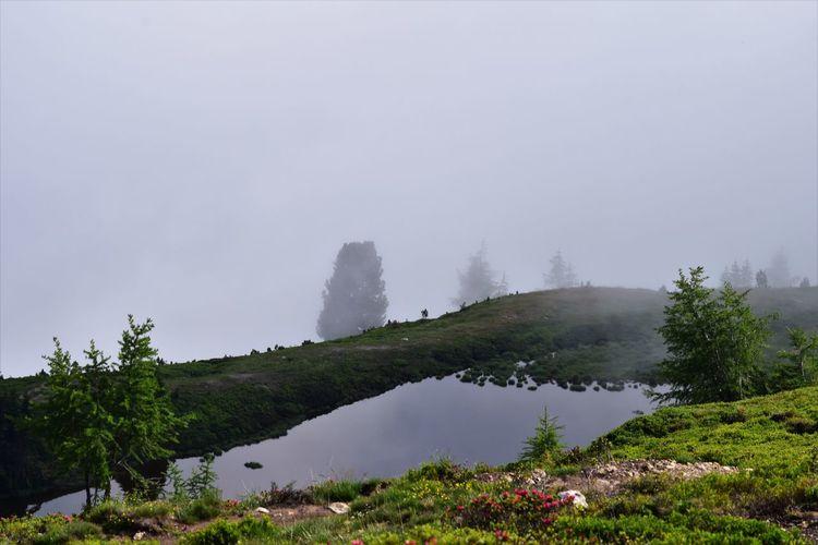 Fog Tranquil