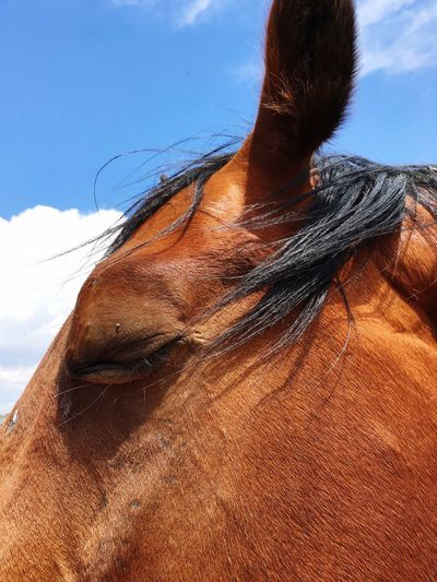 Domestic Animals Mammal Horse Animal Themes One Animal Brown Sky Day Outdoors No People Nature Close-up EyeEm Animal Lover