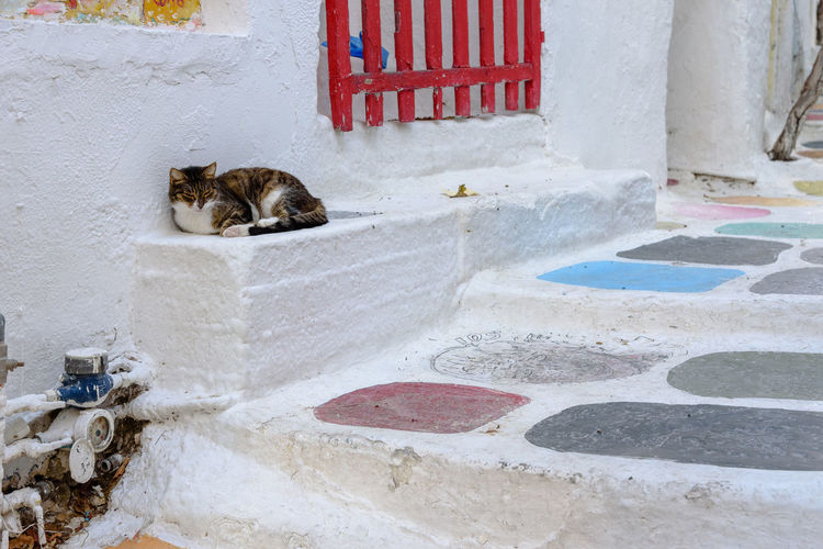 Cat relaxing on wall