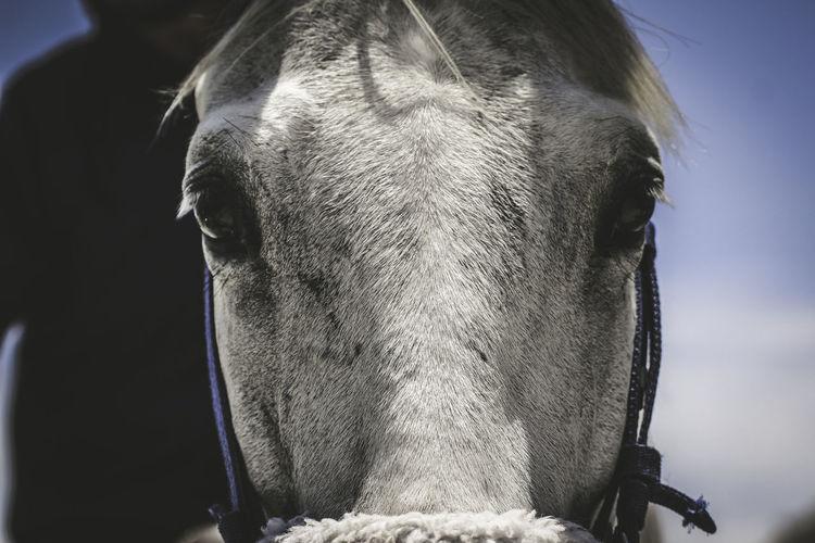 Close-up of horse head