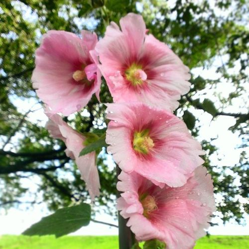 Earlysummer Flower 夏の花