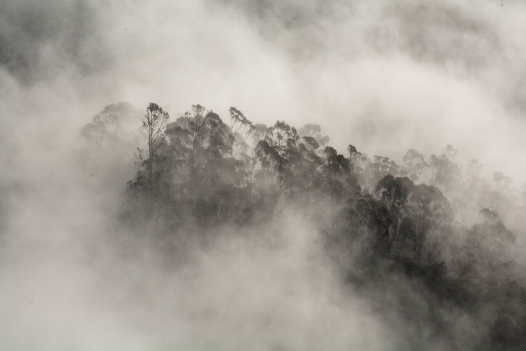 Ghost Forest Beauty In Nature Cloud Cloudy Fog Forest Mystery Nature Outdoors Tranquil Scene