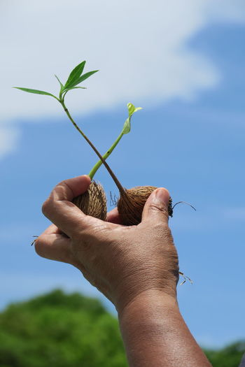 Cropped hand of person holding seedlings against sky