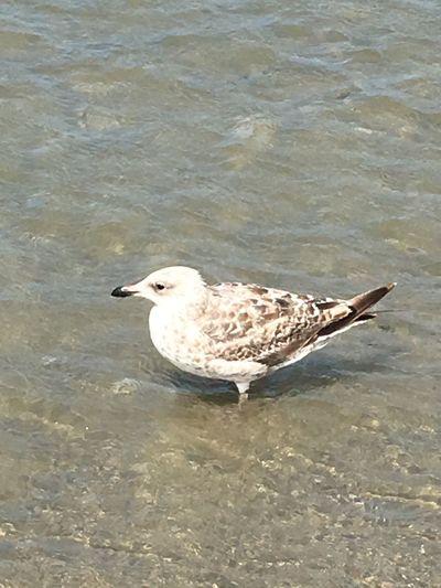 Animal Themes Animal Water One Animal Bird Vertebrate Animals In The Wild