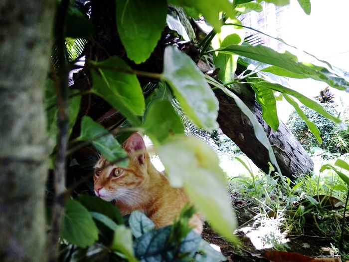 The Great Outdoors - 2016 EyeEm Awards Meow Meow Meow Meow🐱 Cat Garden Garden Photography Animals Animals In The Wild Animal Photography Feline Hunt Outdoors Philippines Home