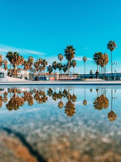 Reflection of palm trees in lake against blue sky