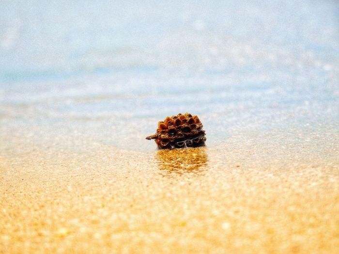 Sea Beach Sea