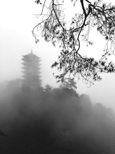 北碚 缙云山 Fog Tree Nature Beauty In Nature Sky Outdoors Day rain