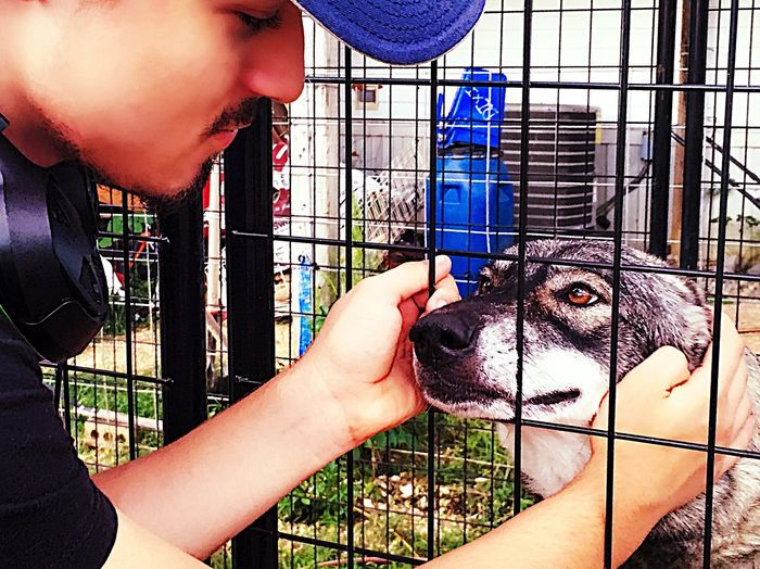 My Boy Sweet Son Connecting With Momma Wolf Dog Hybrid Timber Wolf Teenager Young Man Listening To Music Ball Cap Faces Everyday Emotion Family Matters BestEyeemShots Making Memories! :) On The Wolf/horse Rescue Spending Time Together From My Point Of View Hanging Out With Momma Wolf My Kid My Life Family Mobile County Alabama Eyeem Market