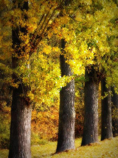 Baumgruppe Bäume Goldener Herbst Goldener Oktober Herzogenaurach Indian Summer Natur Nature Trees