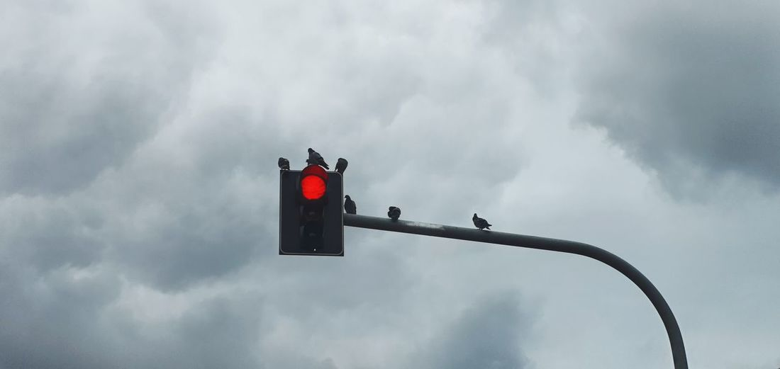 Low angle view of birds perching on traffic signal against sky