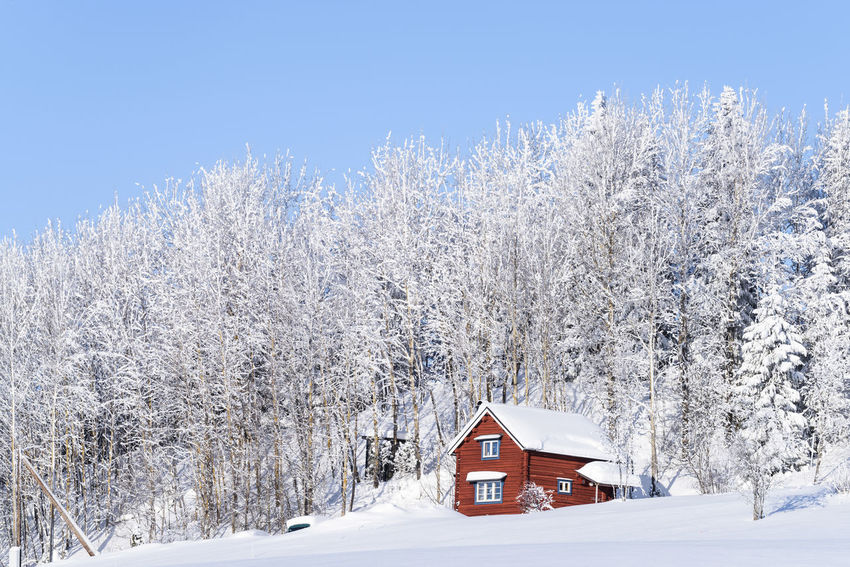 Forest Forest Photography Wintertime Cabin Cabin In The Woods Planet Earth Deep Snow Winter Wonderland Winter Trees Snow ❄ Trees And Nature Nikon Naturephotograpy Landscape Landscape_captures Landscapephotography Trees And Sky Tree Snow Cold Temperature Winter Clear Sky Red Sky Building Exterior Architecture Cottage Log Cabin