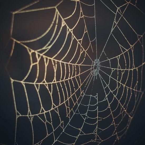 Close-up of spider web against black background