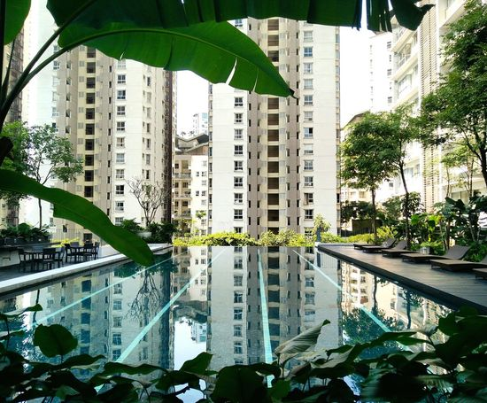 Urbanphotography Serenity Serene Pool Poolside Kuala Lumpur Malaysia  Crybabyqueen Nature In City Poolview Serene, Tranquil, Relaxed, Unruffled, Unperturbed, Unflustered, Untroubled